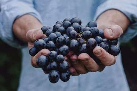 que es la vinicultura